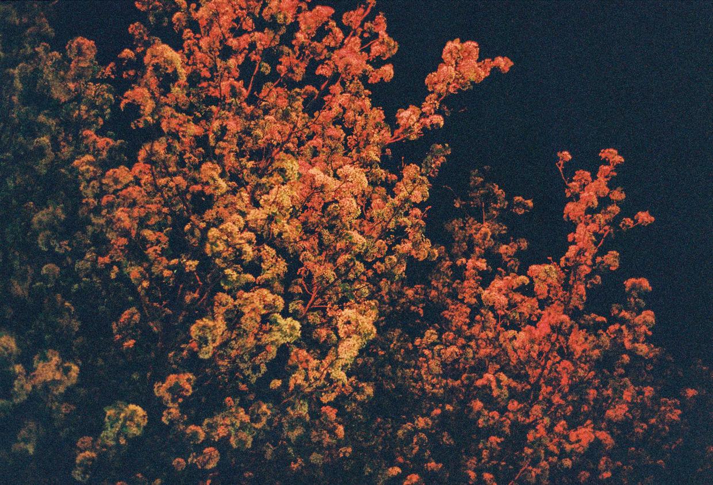 1240x-bignoyes-tree-maxthrelfallphoto-7